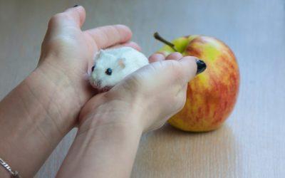 Nos 20 Ans de Lutte contre les Rats et les Souris